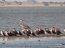 Barberspan Bird Sanctuary - Photo by Linx Africa